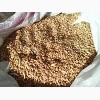Пшеница в мешках. Корм с/х птицам и животным