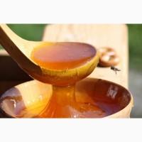 Куплю мед в Запорожской и соседних обл с ПОДСОЛНУХА