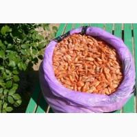Черноморская креветка (продаю оптовым базам)