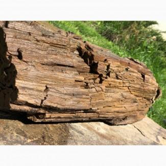 Окаменелое дерево.вес 25 кг