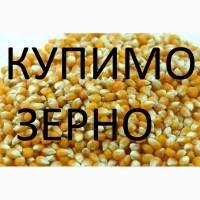 Компанія закуповує дорого кукурудзу подрібнену