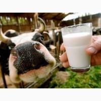 Сухе молоко від виробника