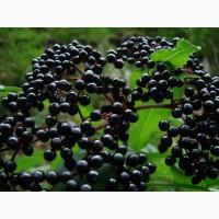 Бузина черная (плоды) 100 грамм