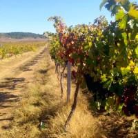Виноградники, грушевые и яблочные сады, сельхоз земля в Севастополе