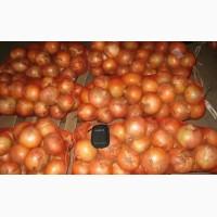 Buy Fresh Onions