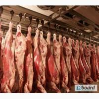 Строим камеры для мяса