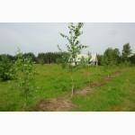 20га земли в 250 км от Москвы (для фермерского хозяйства)