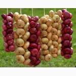 Семена овощей с первых рук, оптои от производителя