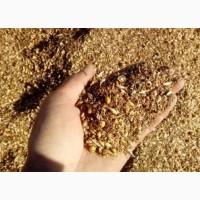 Закуповуємо зерновідходи зернові, олійні, бобові