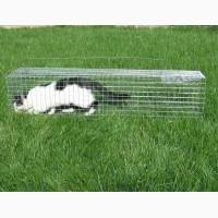 Живоловушка для кота. Абсолютно безопасный отлов котов. Живоловка. Клетка