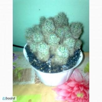 Распродажа коллекции кактусов