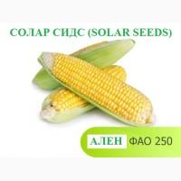 Семена кукурузы АЛЕН ФАО 250 Солар сидс (solar seeds-франция)
