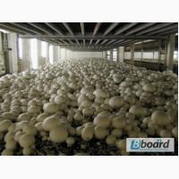 Сбор грибов в Польшу