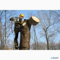 Спил аварийных, сложных, опасных деревьев, угрожающих домам