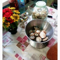 Настоянка гриба Веселка