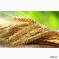 Закупаем пшеницу 2, 3 класс от 60т