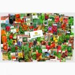 Семена укропа «Лесногородский» - 3 грамма