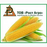 Семена кукурузы Галатея, Хотин, Аджамка, Рубин (Рост Агро) и др