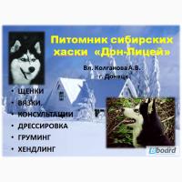 Инструктора по вязке собак