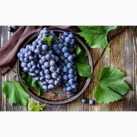 Саженцы и черенки Винограда питомник выращивает Виноград и плодовые деревья есть опт