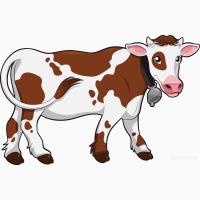 Молодняк, коровы, быки племенные