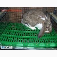 Пластиковые полы для кроликов