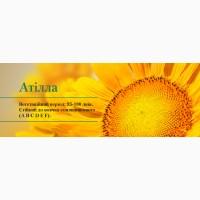 Насіння соняшнику Атілла (95 – 100 дн.) / Гибрид подсолнуха Атилла