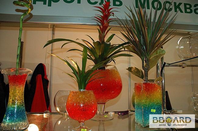 Растения для выращивания в гидрогеле 66