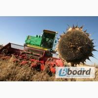 Подсолнечник семена Брио, Опера, Тунка, Мегасан, Роки, Армони, кукуруза-Амарок, ДК315, ДКС3511