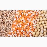 Куплю кукурузу, пшеницу, сою. Зерноотходы