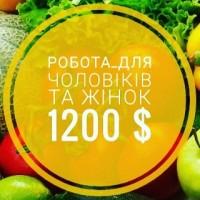 Робота для жінок та чоловіків, сімейних пар Зп 1200$ – сільське господарство (Чехія)