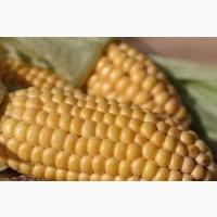 Кукуруза ВН 6763 ФАО 320