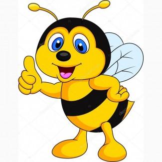 Куплю мед сРАПСА оптом без проверок по УКРАИНЕ