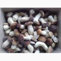 Продам мороженный белый гриб