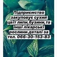 Прием лекарственных растений. Бузина, липа и др