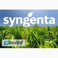 Семена озимого рапса в ассортименте от производители Syngenta (Сингента)
