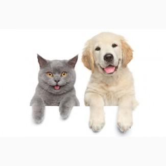 Добавки вкусо-ароматические для домашних животных (собаки, кошки)