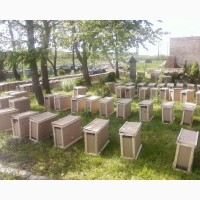 Продам Пчелопакеты, бджолопакети карпатка на весну 2019 с Доставкой
