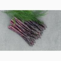 Продам фіолетову спаржу, саджанці фіолетовоі спаржі оптом і в роздріб