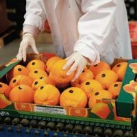 Работа для женщин в Литве на складе овощей и фруктов