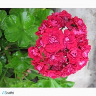 Продам комнатные растения, кактусы, суккуленты