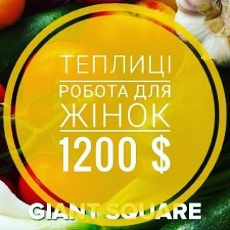 Робота в теплицях для жінок (Чехія) 1200$
