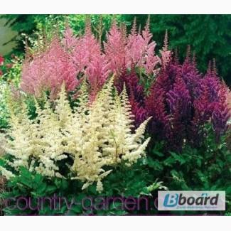 Саженцы, растения, деревья, цветы, посадочный материал (опт. от 1000 грн.)
