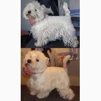 Груминг, стрижка собак