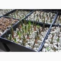 Цеолит для растений. Кактусов, Орхидей, фиалок очистка воды