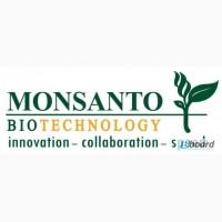 Семена озимого и ярового рапса от производителя Monsanto (Монсанто)