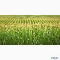 Хармоні, Прима, Базис, Тітус, Мілагро, Діален Супер, Дуал Голд - гербіцид на кукурудзу