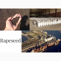 Rapeseeds FOB ports of Black Sea