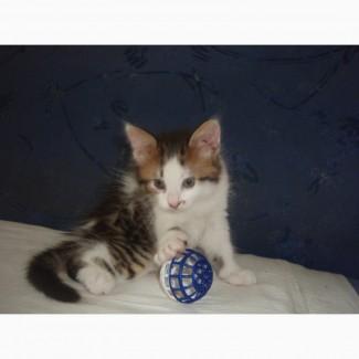 Бесплатно в добрые руки хорошеньких домашних котят