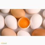 Продам фермерське яйце